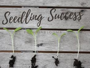 Seedling Success - My top tips
