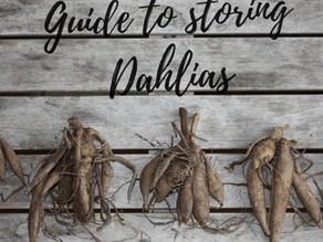 Lifting & Storing Dahlias
