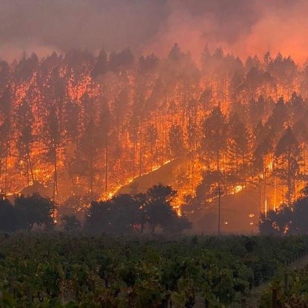 VIRTUAL Wildland Fireline Safety Course