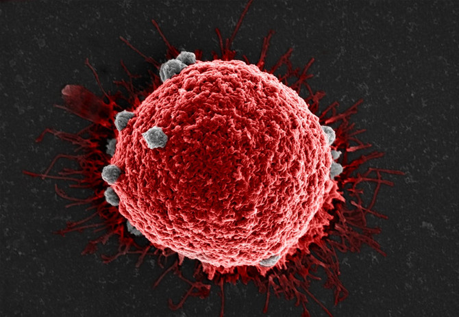 A new weapon for the war on cancer: a broad-spectrum circulating tumor cell capture agent for diagno