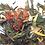 Thumbnail: BIRD OF PARADISE- Exotic strawberry green tea