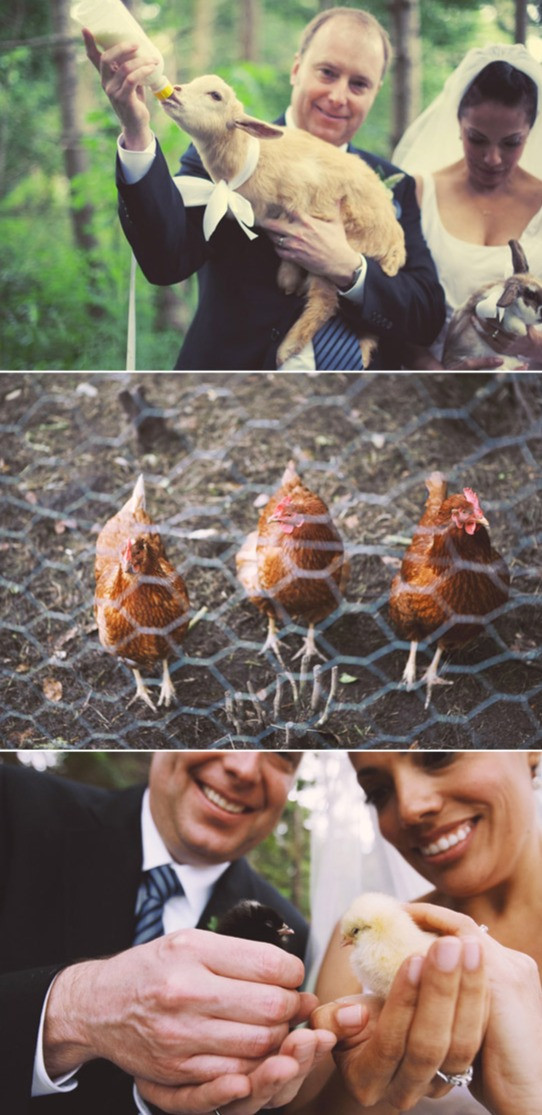 romantic-farm-wedding-101_edited.jpg