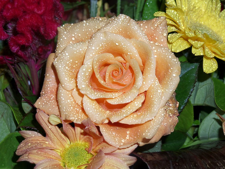 Raindrops on Roses:  My Favorite Things