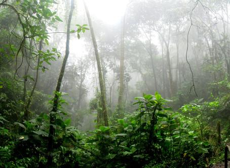 ¿Qué hacer para salvar nuestras selvas y bosques?