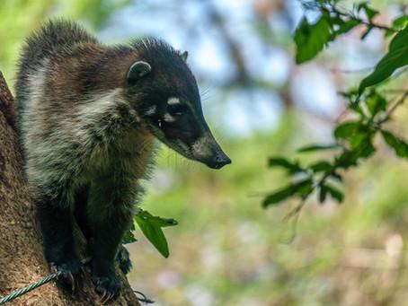 5 animales que podés encontrar en la Reserva Natural Atitlán (parte 1)