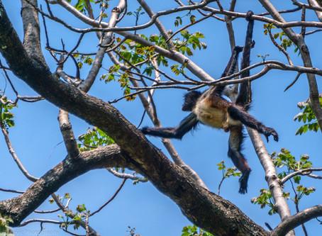 Vidas de monos: historia de nuestros monos I  Monerías o historias de amor