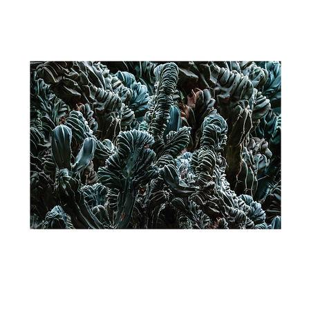 2. The Plant In Garden Of Saint Yves.jpg