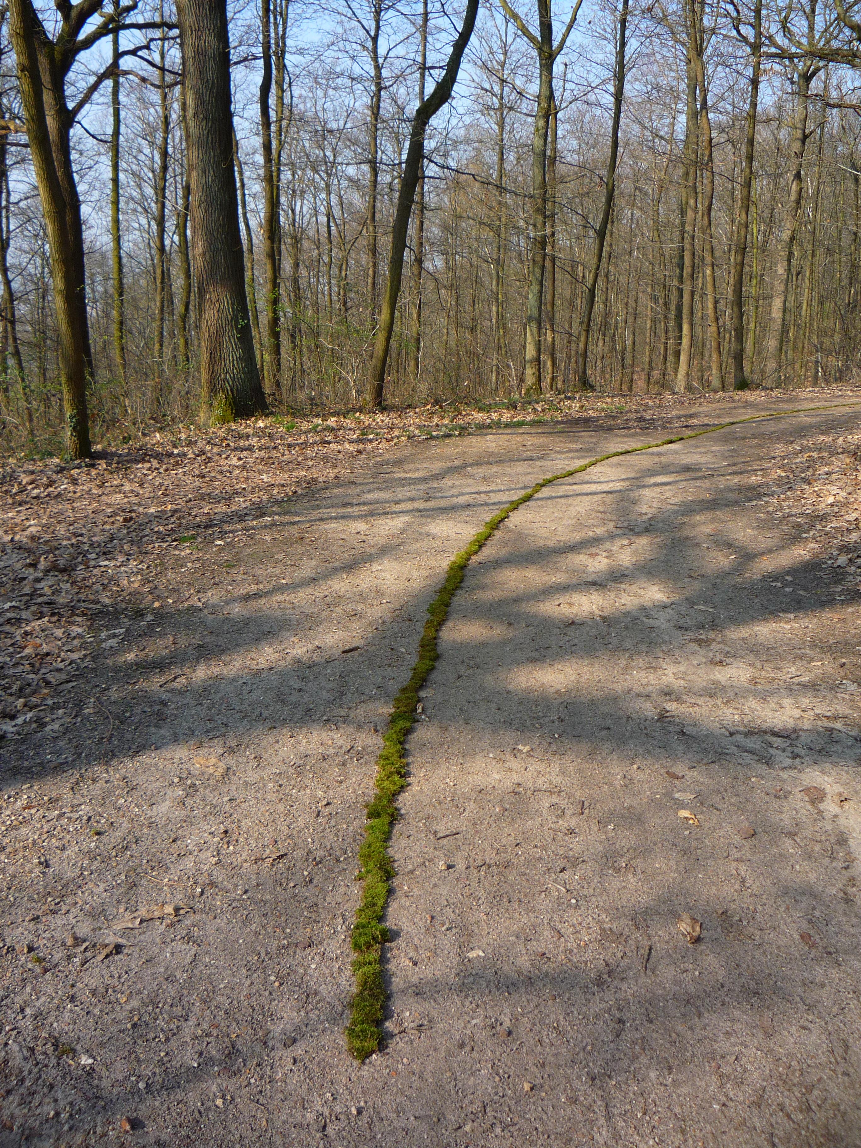 Ligne verte