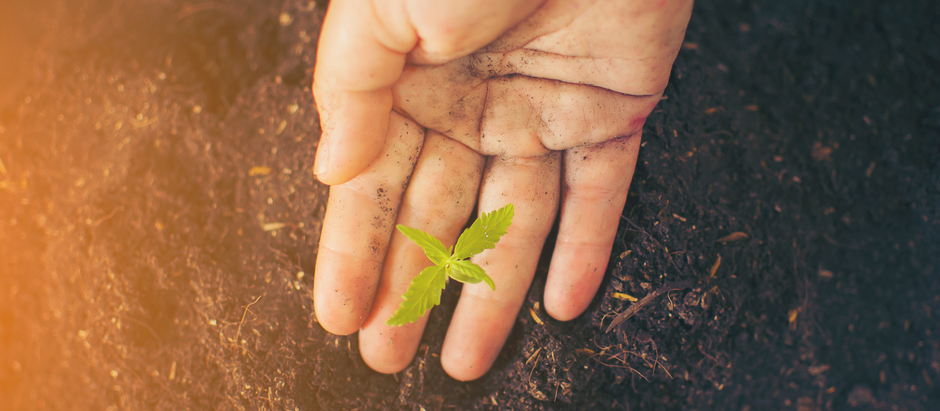 7 reasons to get your soil tested
