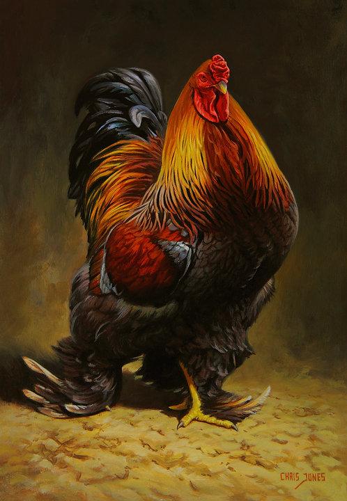 The Old Boy - Brahma Cock
