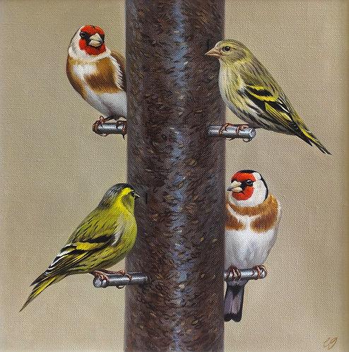 Bird Feeder II - Goldfinches & Siskins