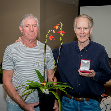 Ratcliffe Award 2020 - Best Phragmipedium Hybrid