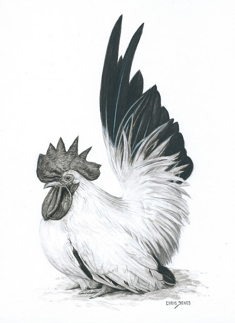 Black-Tailed Japanese Bantam Cock