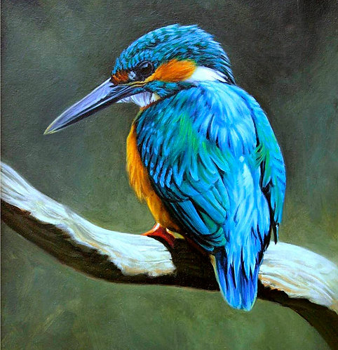 Greetings Card - Kingfisher
