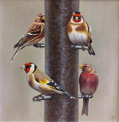 Bird Feeder I - Goldfinches & Redpolls