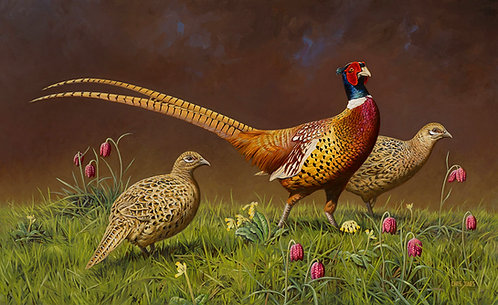 Now That April Is Here - Pt 1 (Pheasants)