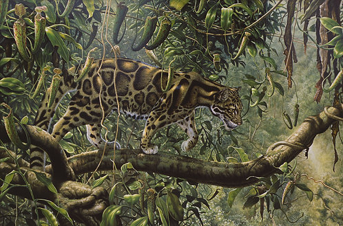 Nepenthe - Clouded Leopard & Pitcher Plants