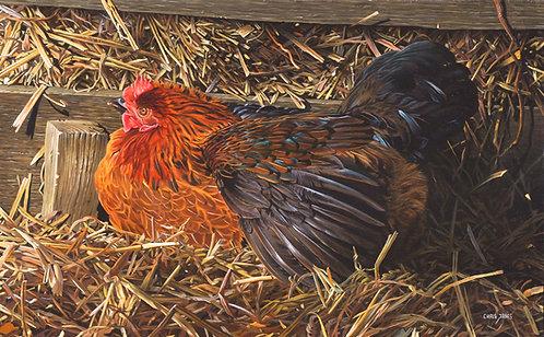 A5 Postcard - Sunning Hen