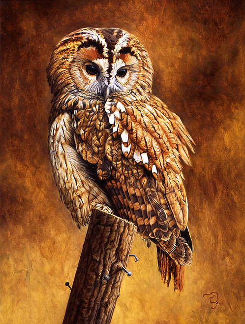 Greetings Card - Tawny Owl