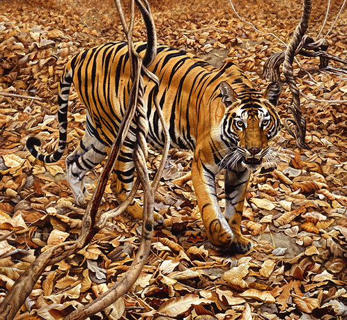 Descending Tigress