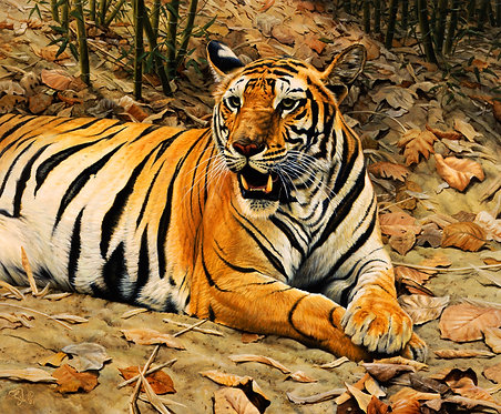 Indian Tigress