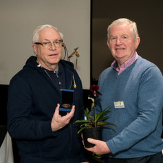 Ratcliffe Award 2019 - Best Novelty Paphiopedilum Hybrid