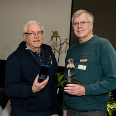 Ratcliffe Award 2019 - Best Paphiopedilum Primary Hybrid