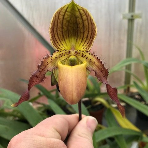 Paph. Judge Philip