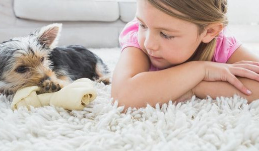 How Are Carpets Related To Your Indoor Air Quality?