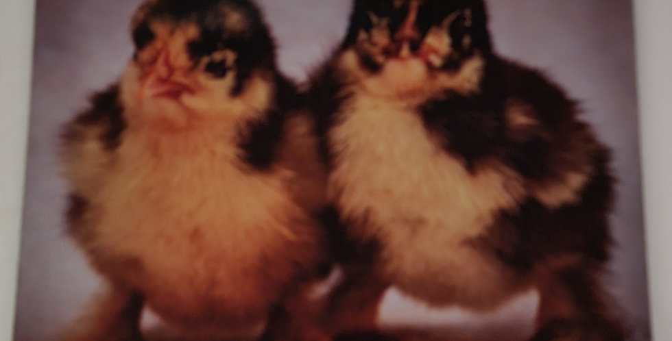 """Mouse Pad Baby Chicks Design 7.75"""" x 9.25"""" x 1/4""""Thick"""