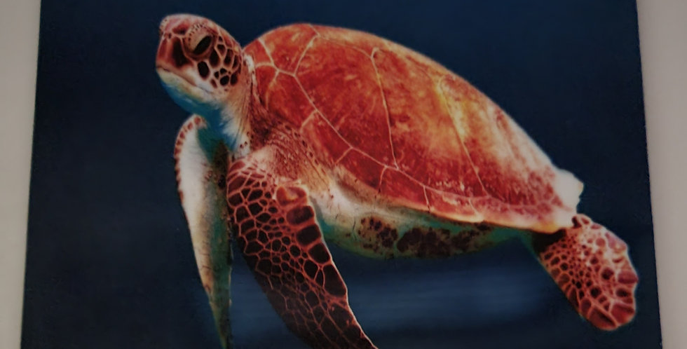 """Mouse Pad Sea Turtle Design 7.75"""" x 9.25"""" x 1/4"""" Thick"""