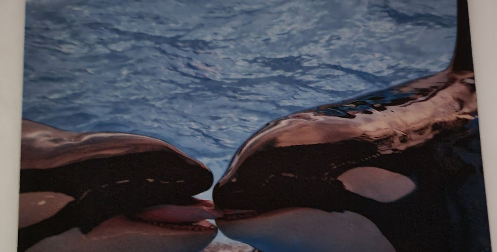 """Mouse Pad Kissing Killer Whales Design 7.75"""" x 9.25"""" x 1/4"""" Thick"""