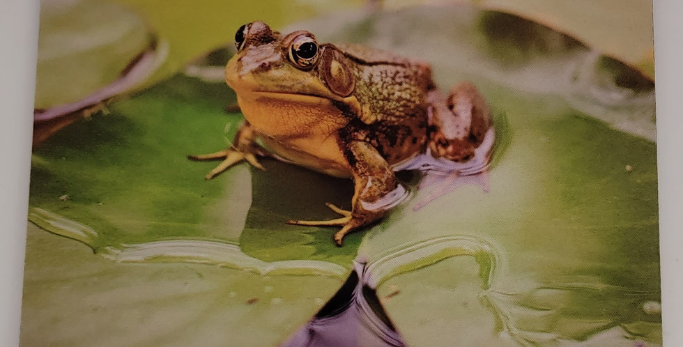 """Mouse Pad Frog & Lily Pad Design 7.75"""" x 9.25"""" x1/4"""" Thick"""