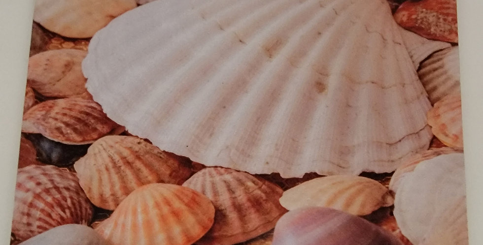 """Mouse Pad Colorful Sea Shell Design 7.75"""" x 9.25"""" x1/4"""" Thick"""