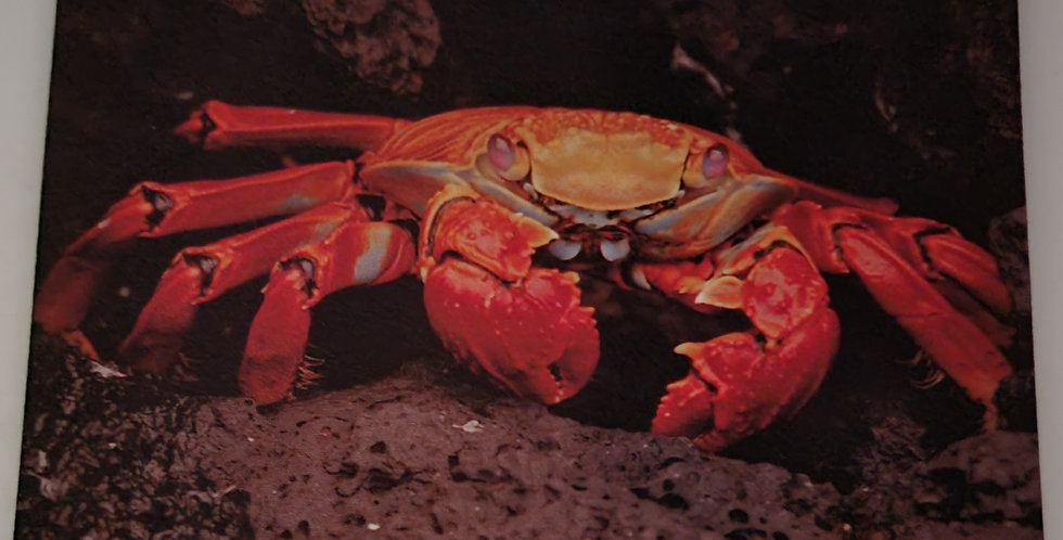 """Mouse Pad Crab Design 7.75"""" x 9.25"""" x 1/4""""Thick"""