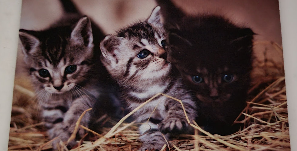 """Mouse Pad Three Kitten Desing 7.75"""" x 9.25"""" x1/4' Thick"""