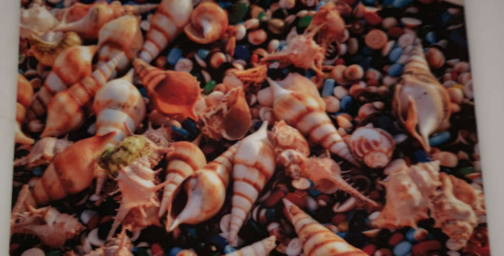"""Mouse Pad Shells & Gems 7.75"""" x 9.25"""" x1/4"""" Thick"""