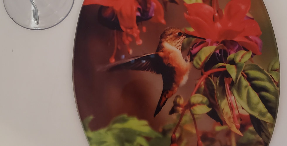 "Humming Bird Sun Catcher 9"" x 6.75"" x 02"""