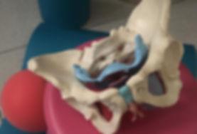 modellino di bacino per corsi preparto e riabilitazione del pavimento pelvico ostetricaclementina dell' omo