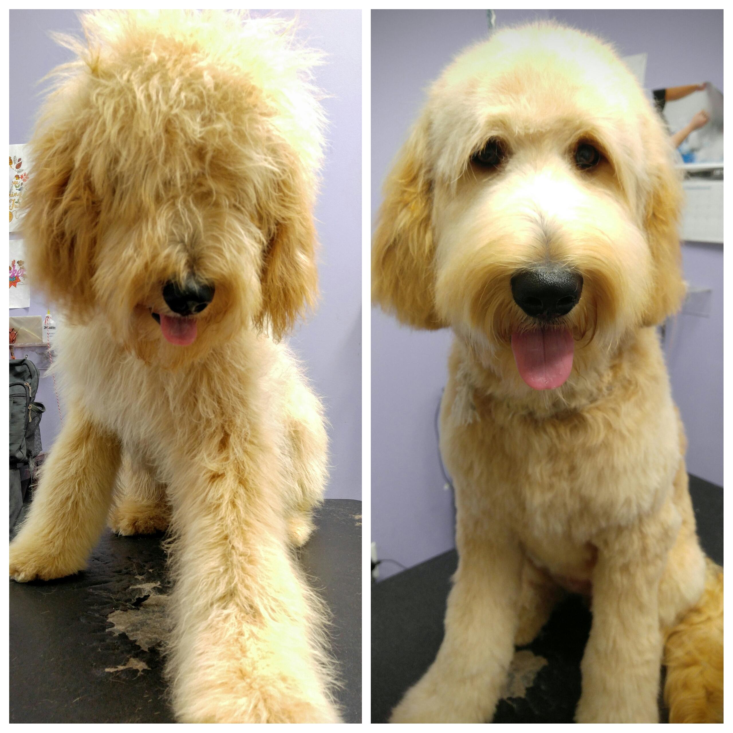 Bark Avenue Dog Rochester Ny Dog Groomers