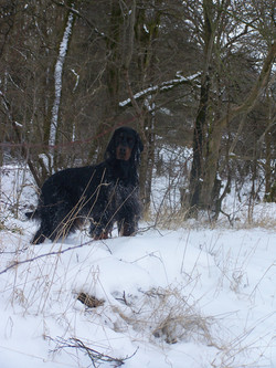 Isla in the snow