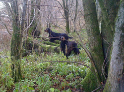 Skye and Isla in the woods