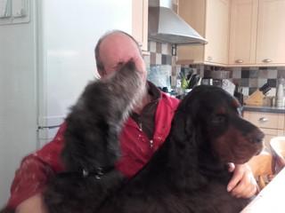 Meet Callum the Deerhound puppy