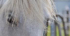 horse-1700434_1920.jpg