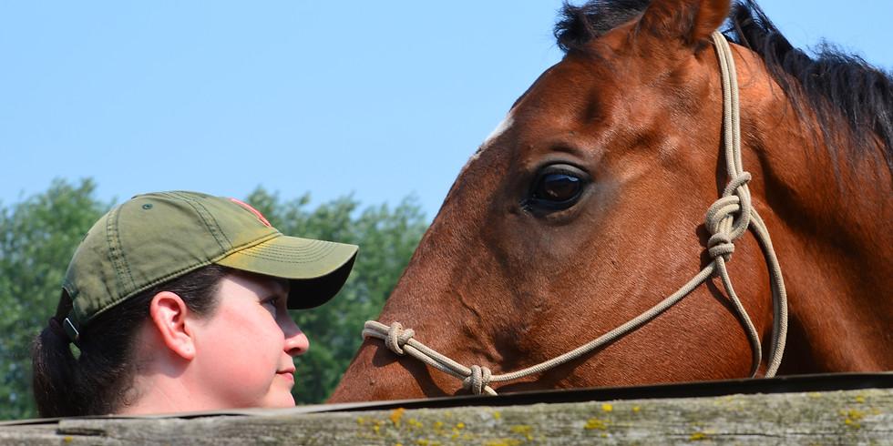 Horse Experiences & Clinics