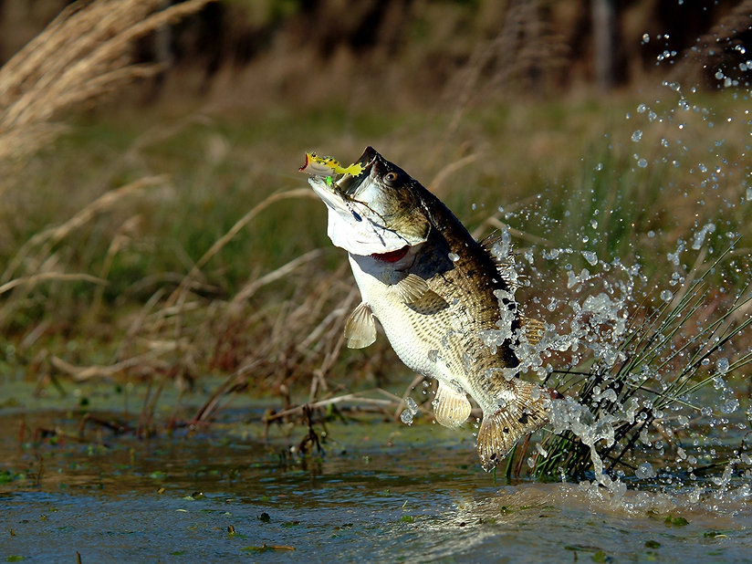 22-five fishing lure