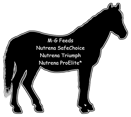 horse%20outlines_edited.png