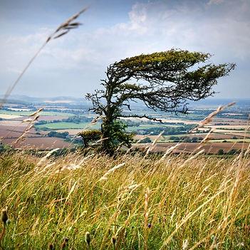 windy_hill.jpg