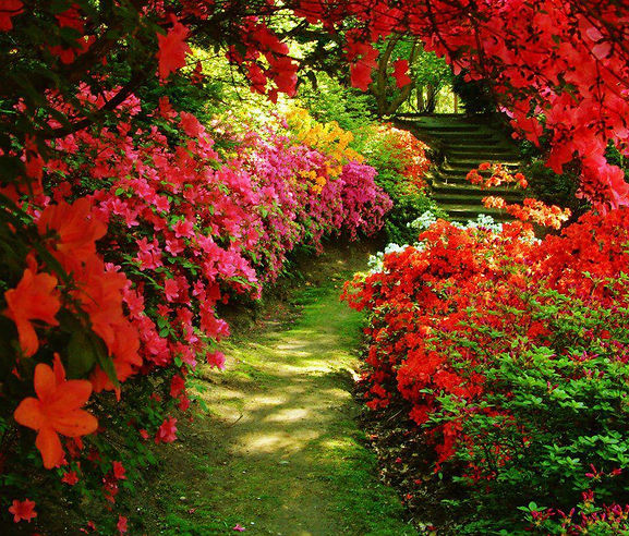 camino de flores.jpg