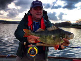 Fishing London client breaks 4 IGFA world records for Perch caught on the fly. (Awaiting Confirmatio